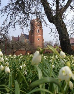 Klosterlilja och rötornet